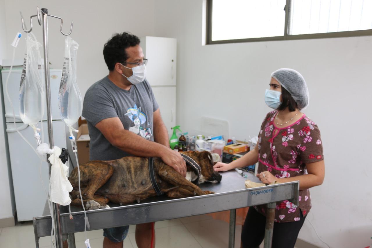 Canil Municipal de Iquique ha realizado 566 esterilizaciones desde inicio de emergencia sanitaria