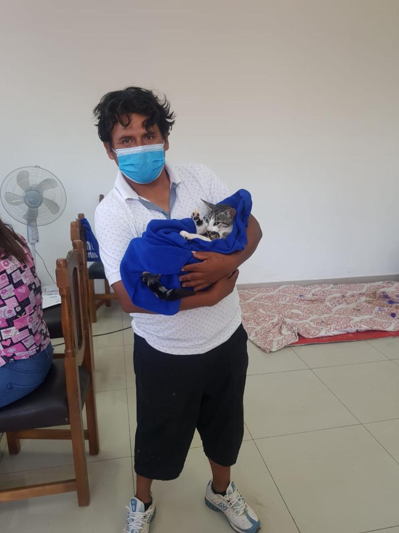 ¡Atención Doglovers y Catlovers!: Canil Municipal de Iquique abre mil cupos gratuitos para esterilizaciones